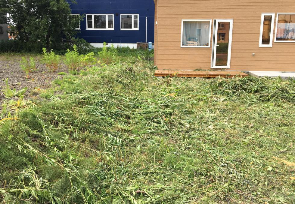 札幌市厚別区の舗装・畑・雑草対策工事、正面の雑草を除去する様子