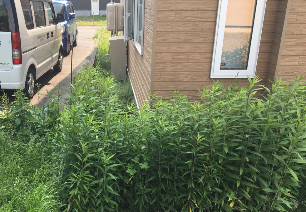 札幌市厚別区の舗装・畑・雑草対策工事、お家裏の雑草の様子